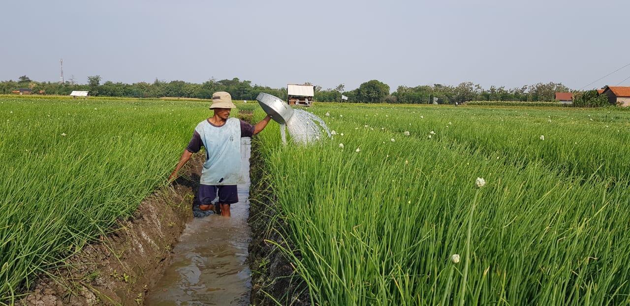 Upah Harian Buruh Tani Naik, Guru Besar Unhas: Infrastruktur Pertaniannya Baik
