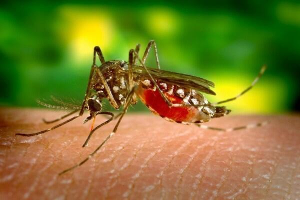 Bikin Tidur Lelap, 7 Cara Unik Jadul Ini Ampuh Usir Nyamuk Membandel