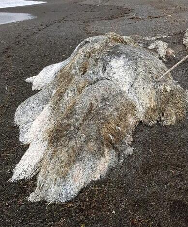 Penemuan Monster Laut Berbulu Yang Menghebohkan Warga Desa Di Rusia