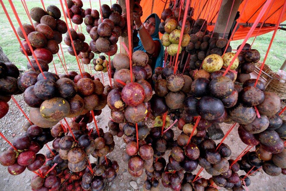 Satu Juta Pohon Manggis di Ranah Minang