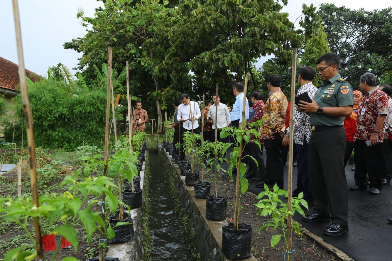 Begini Capaian Sektor Pertanian Hasil Kerjasama Kementan dengan TNI AD