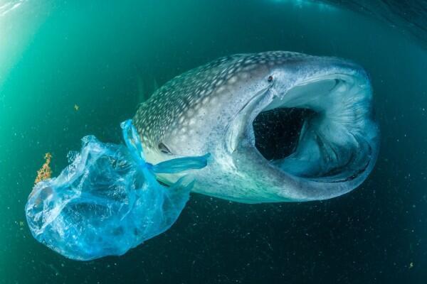 10 Potret Miris Hewan dengan Sampah Plastik, Yuk Selamatkan Mereka!