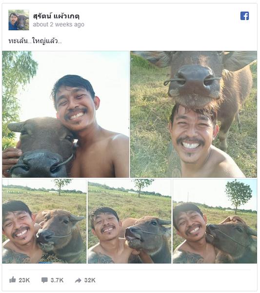 Ada Penipuan di Balik Selfie Kerbau Senyum yang Viral?