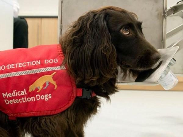 Ternyata, Anjing Bisa Mendeteksi Malaria pada Manusia! Ini Kata Ahli