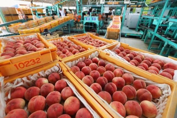 Taiwan Perpanjang Embargo Makanan Dari 5 Prefektur di Jepang