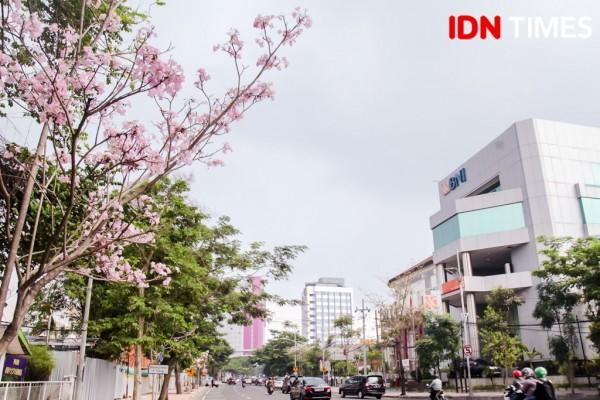 Bak Jepang, Ini 15 Potret Cantiknya Bunga Sakura ala Surabaya