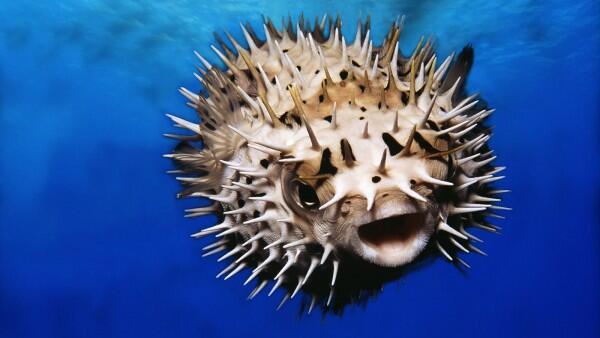 Sangat Mematikan, Inilah 10 Hewan Paling Beracun di Seluruh Dunia!