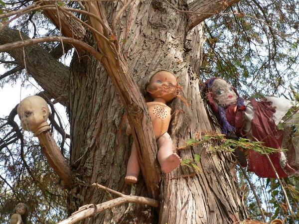 10 Hutan Ini Dianggap Paling Angker di Dunia, Berani Masuk?