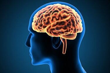 Ternyata Otak Masih Bekerja Setelah Jantung Berhenti Berdetak Gan!