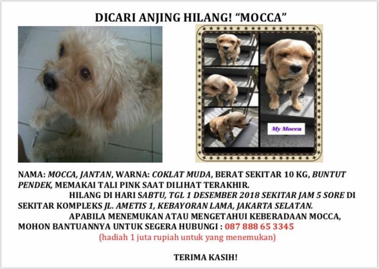 Mocca Hilang - Mohon bantuan cari Anjing hilang di Permata Hijau, jakarta selatan