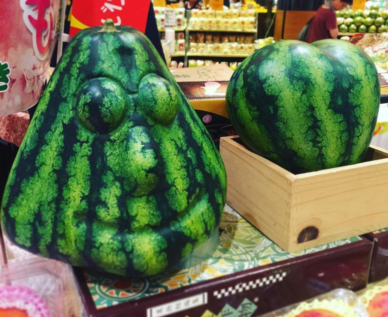 Ini Sebabnya Semangka Jepang Terkenal Paling Enak Dan Manis
