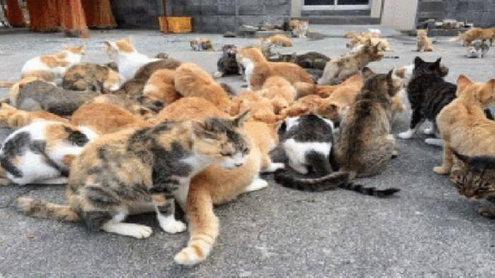 Dilema kucing kucing liar
