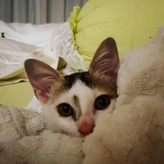 Razia Kucing Viral, Anies Instruksikan Untuk Ditunda Sementara