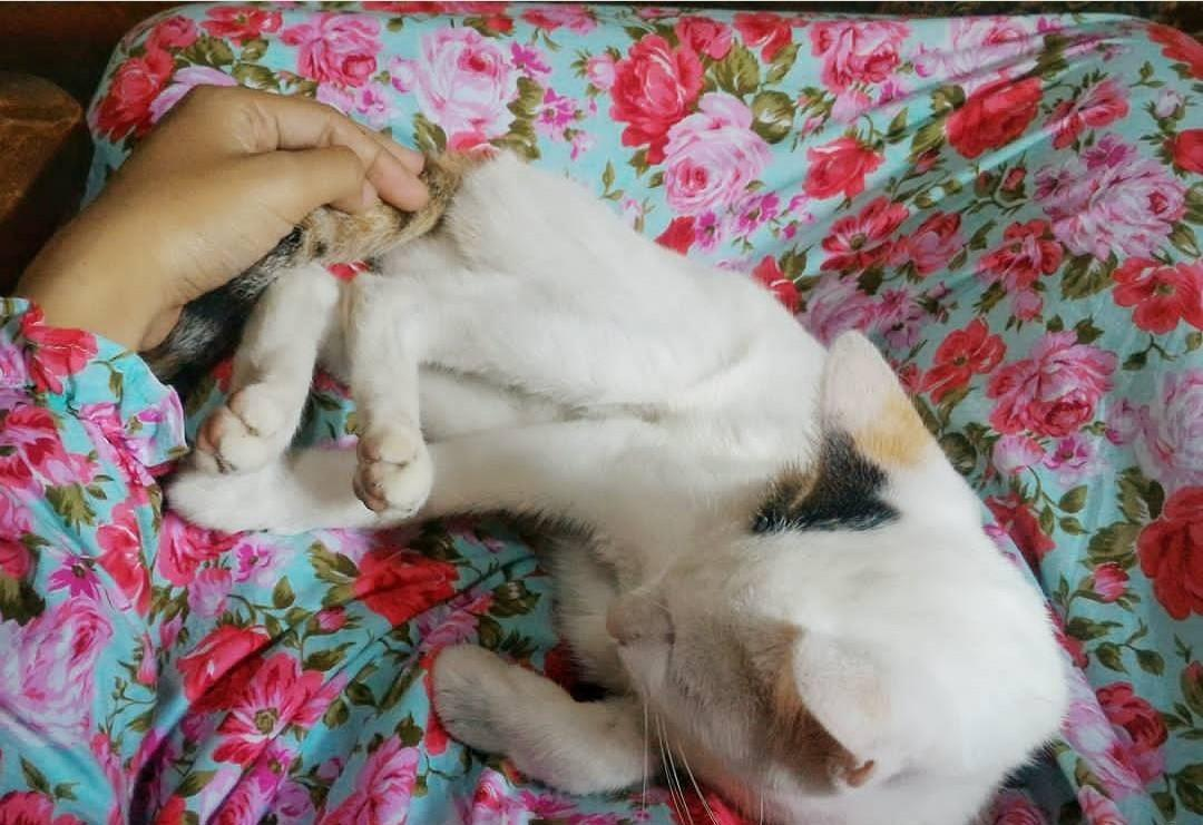 Kucing : 1 Cukup , 2 Sangat Sangat Cukup Versi Ane