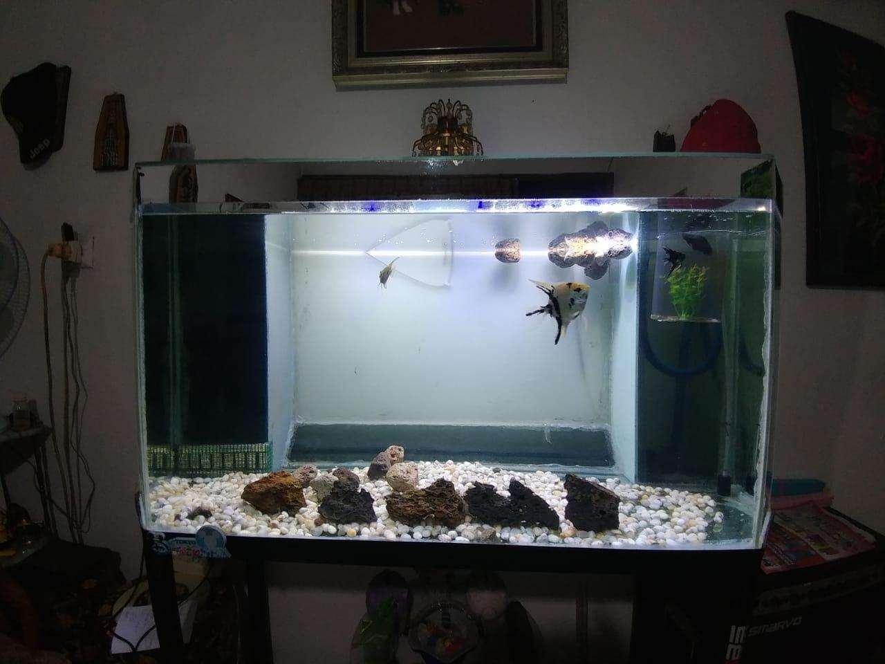 Mau Punya Aquarium Ikan Hias Di Rumah Pahami Dulu Langkah