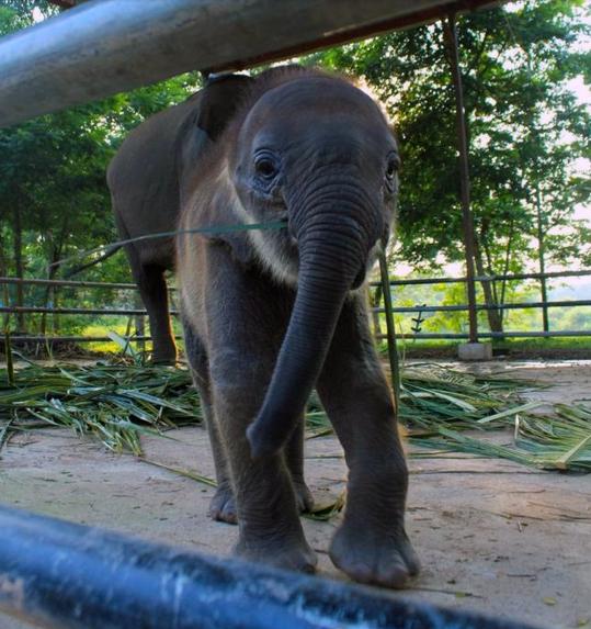 Lucunya Gajah-Gajah di Taman Nasional Way Kambas