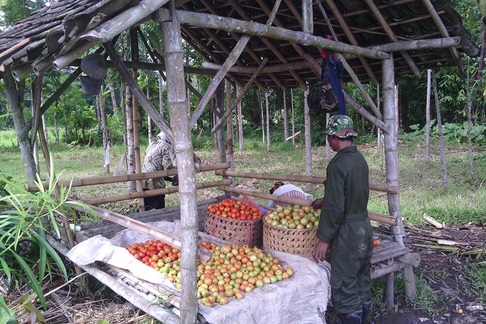 Harga Pasar, Musuh Terbesar Petani [ Pengalaman ]
