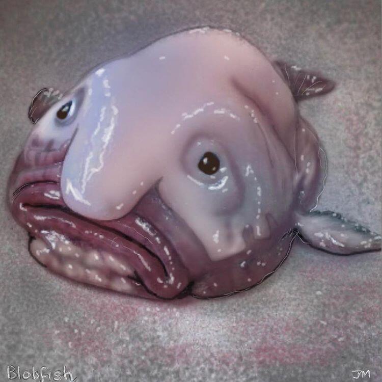 Blobfish, Ikan Terkenal yang Mendapat Predikat Buruk Rupa
