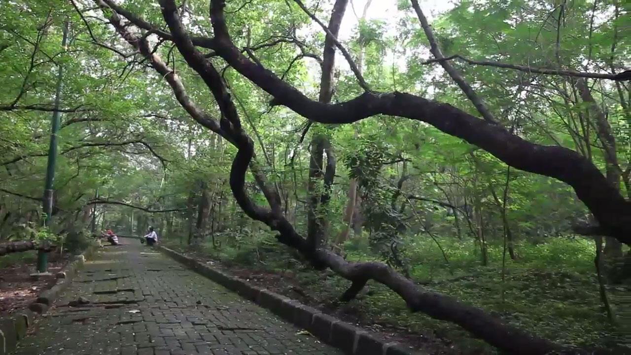 "Pertama Kali Ke ""Hutan Kota Srengseng"" di Jakarta"