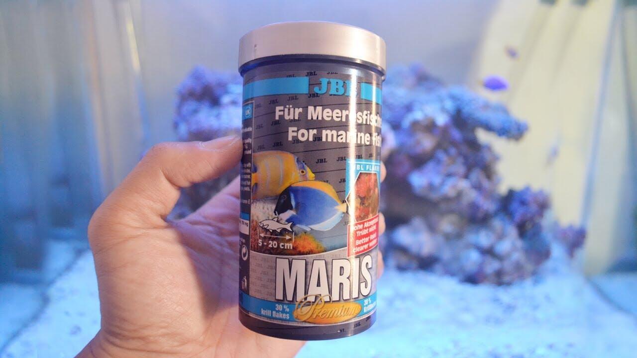 Perhatikan Hal-hal Berikut Jika Agan Ingin Pelihara Ikan Air Laut di Rumah