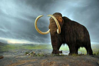 Bolehkah Menghidupkan Kembali Binatang Punah? Atau Melawan Takdir