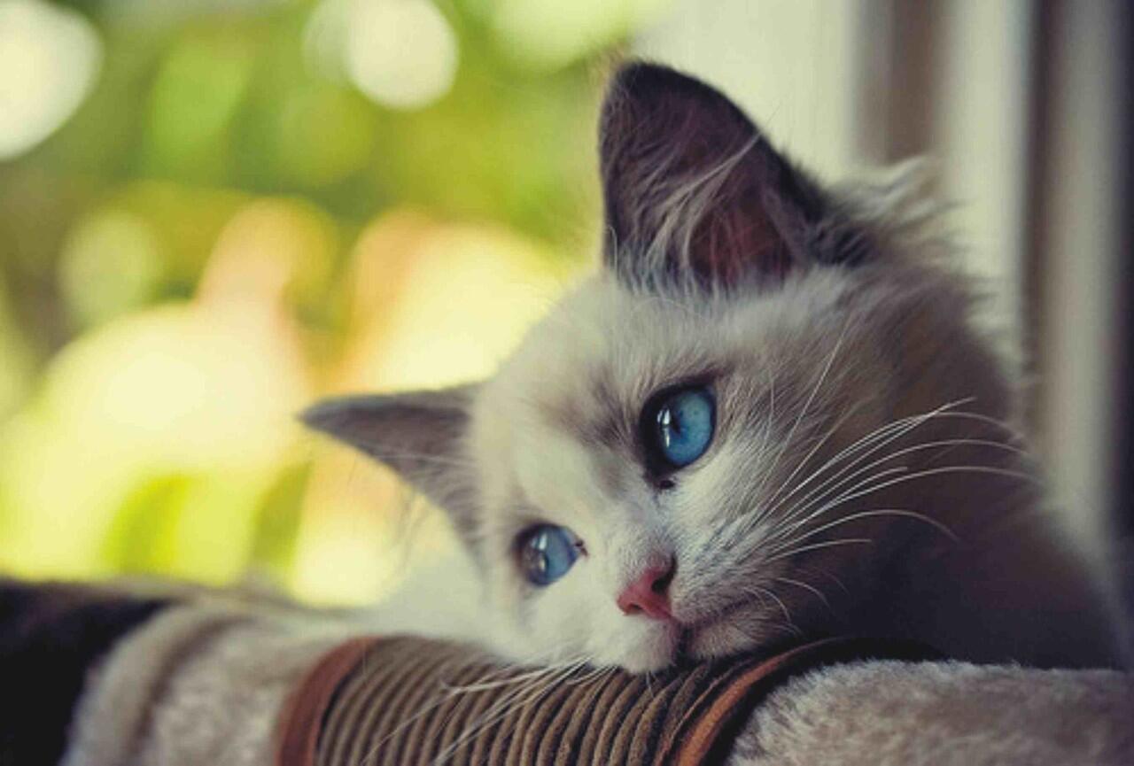 Bahasa Kucing yang Wajib Diketahui Jika Gan Sis Ngaku Cat Lovers!