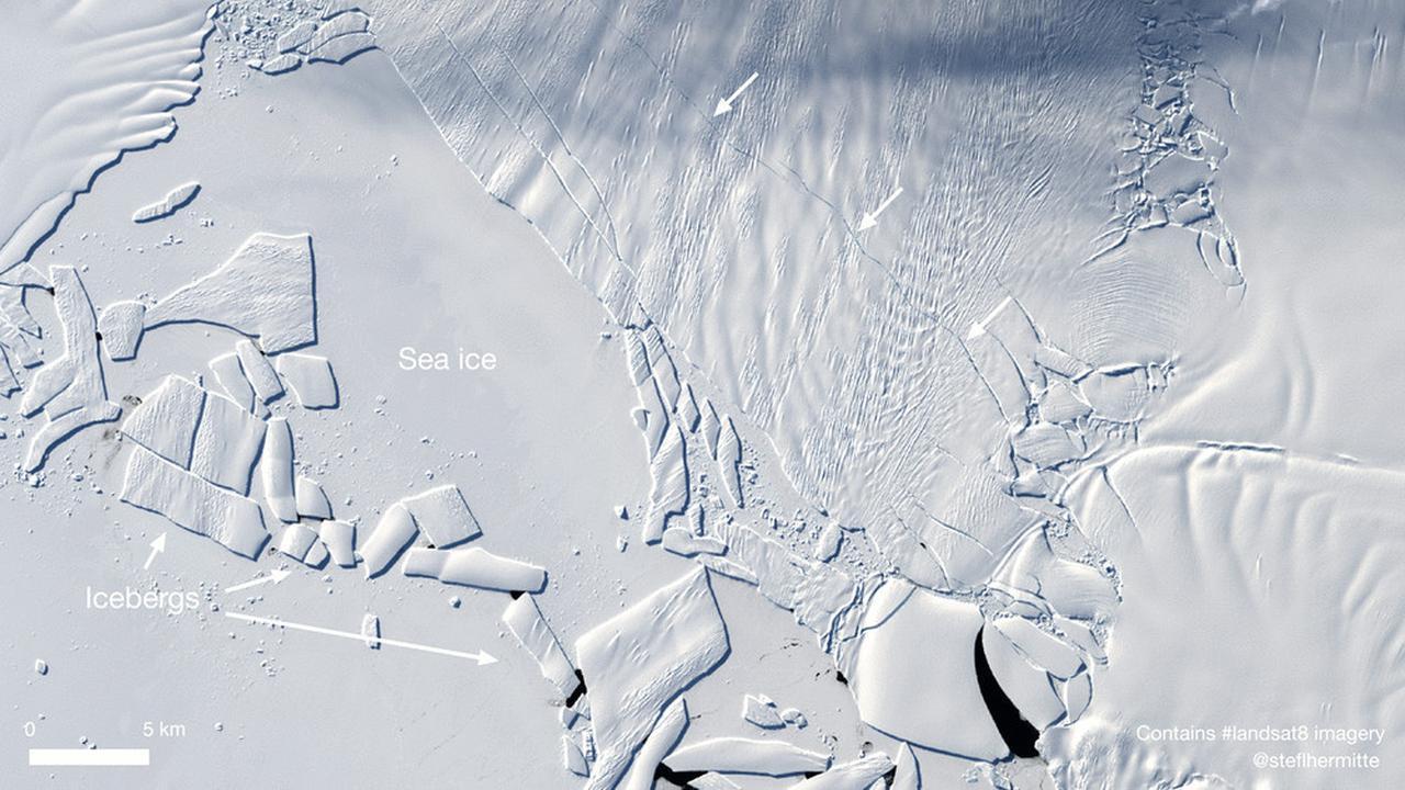 Ada Makhluk Menyeramkan hingga Ancam Hidup Manusia, Ini 4 Fakta Unik Antartika