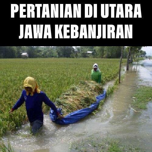 Pertanian di Utara Jawa Kebanjiran