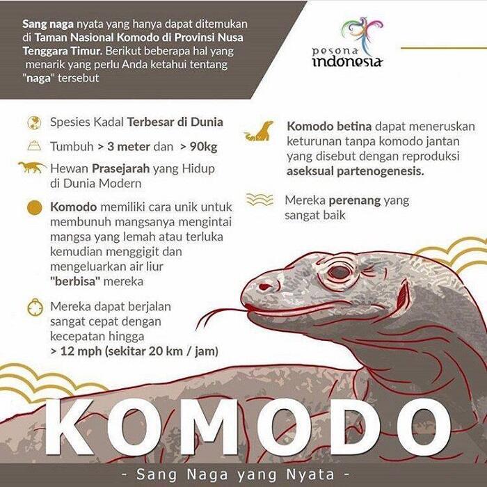 Penutupan Taman Nasional Komodo dan Polemik Harga tiket