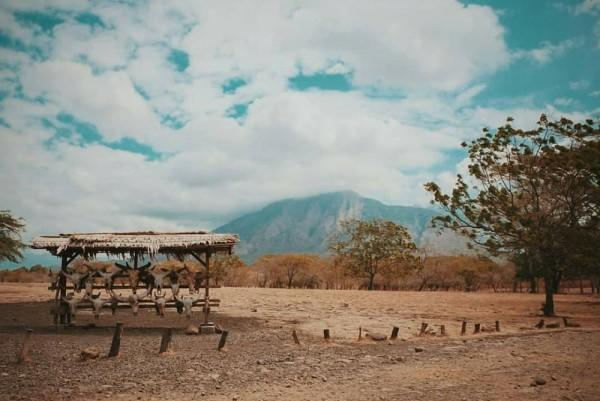Bagai Bertualang di Afrika, Ini 7 Pesona Baluran yang Wajib Kamu Tahu