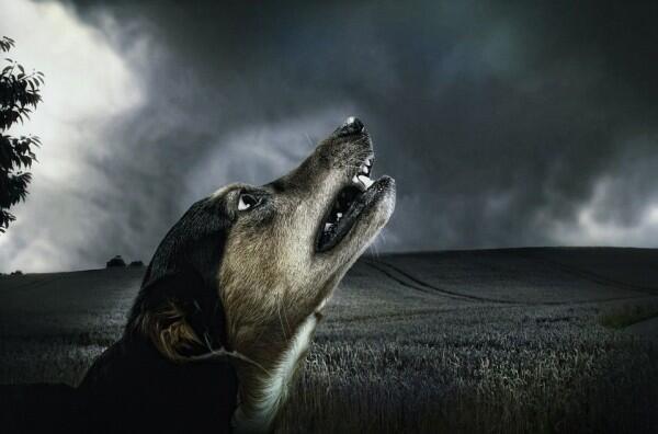 10 Kisah Pengalaman Seram, Pertanda Jika Ada 'Makhluk' di Sampingmu