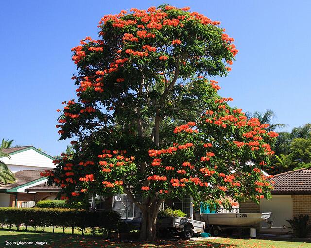 12 Pohon Dengan Bunga Yang Indah, Salah Satunya Dari Indonesia!