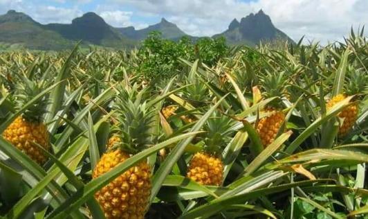 Mitos Unik Penciptaan Buah-buahan di Dunia
