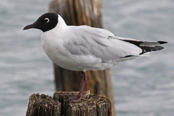 7 Burung Endemik Pegunungan Andes yang Beda dari Lainnya