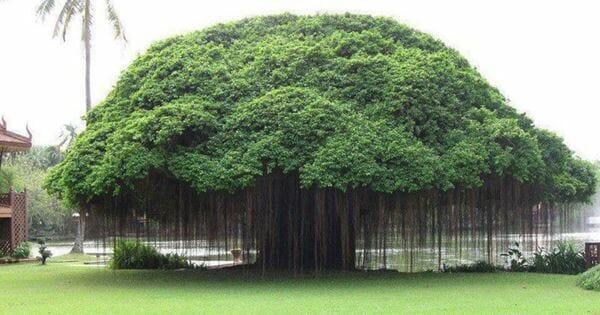 10 Pohon yang Dipercaya Sebagai Tempat Tinggal Makhluk Halus