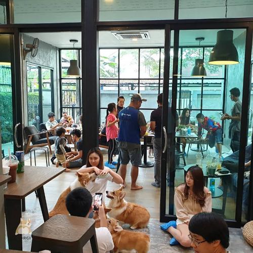 Mau Main Sama Anjing Corgi? Datang ke Kafe Ini Gansist!