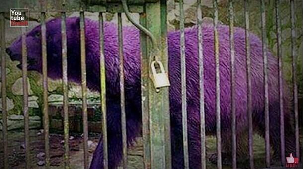 10 Hewan dengan warna Paling Unik, Nomor 4 Banyak yang Belum Pernah Lihat