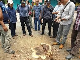 Bukti Keganasan Manusia, Pohon Di Ruas Jalan Saja Masih Ditebang Dan Dijual