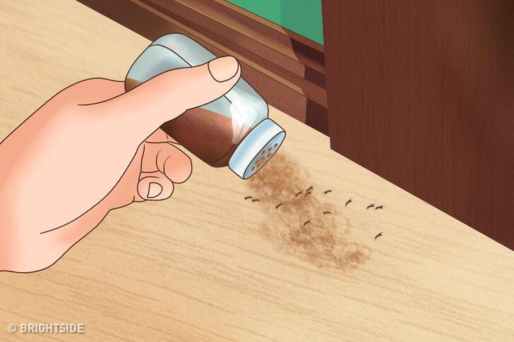 Ini Dia 5 Cara Mengusir Serangga Pengganggu Dengan Bahan Alami