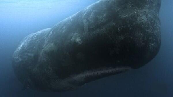 Pulau Bajak Laut Yang Menyimpan Banyak Misteri