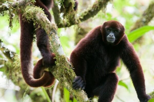 5 Mamalia Unik yang Hanya ada di Pegunungan Andes, Amerika Selatan