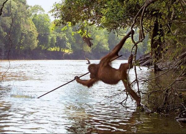 5 Hewan dengan Kemampuan Berburu dan Memasak, Seperti Manusia Aja ya!
