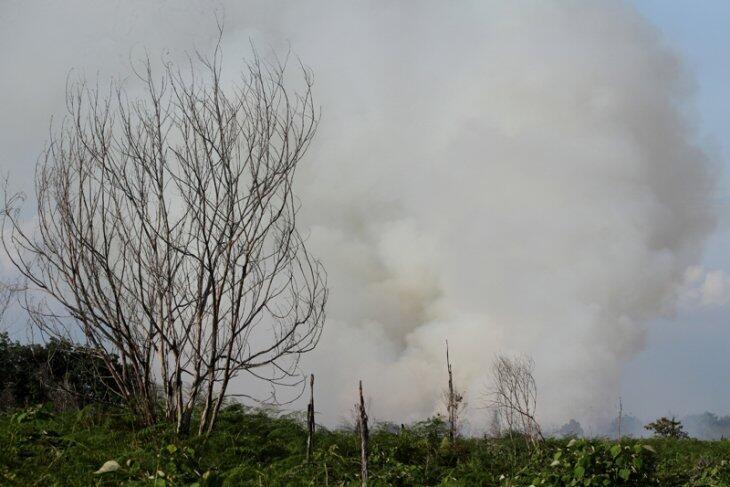 KLHK Terus Bentuk Masyarakat Peduli Api dalam Pengendalian Karhutla