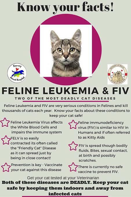 5 Penyakit Kucing yang Wajib Diketahui oleh Pecinta Kucing