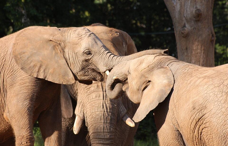"""Romance"" di dunia binatang? Berikut cara-cara aneh mereka."