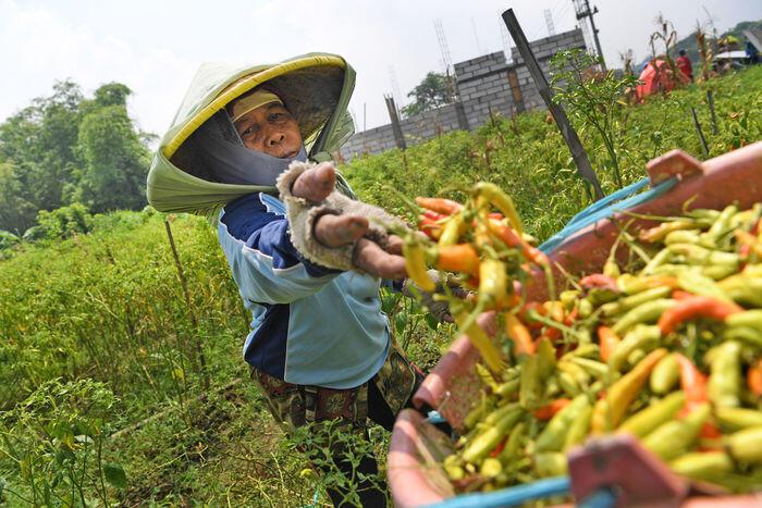 Sektor pertanian Indonesia kian melesat