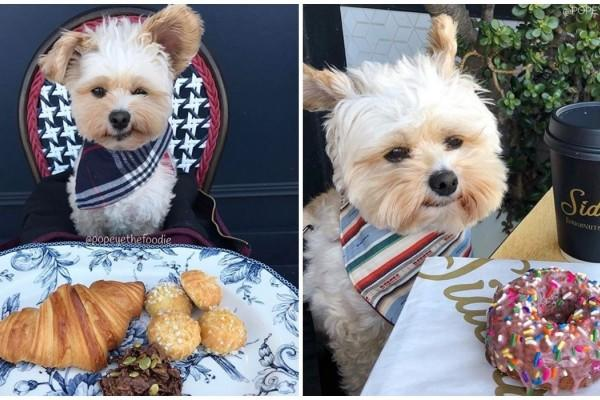 Potret Lucu Anjing Sebagai Foodie S Gemesin Banget Sih