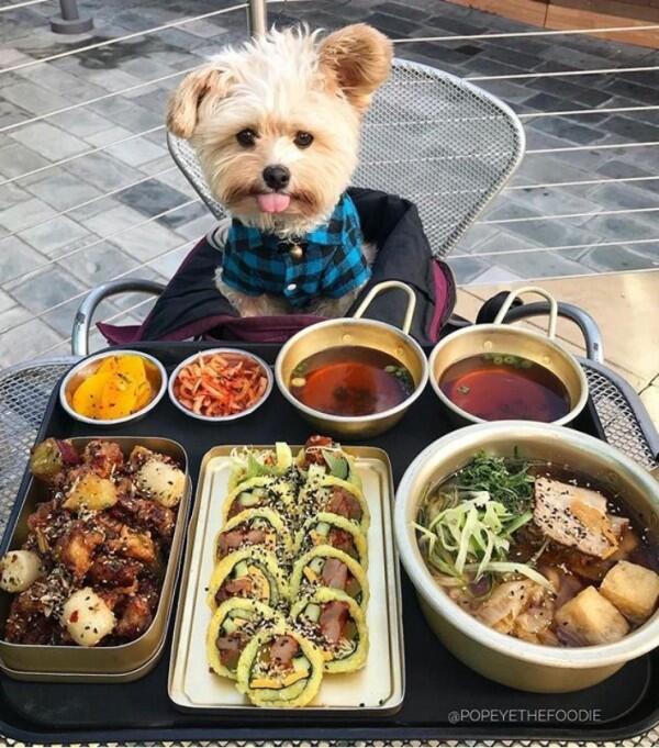 10 Potret Lucu Anjing Sebagai Foodies Hits, Gemesin Banget Sih!