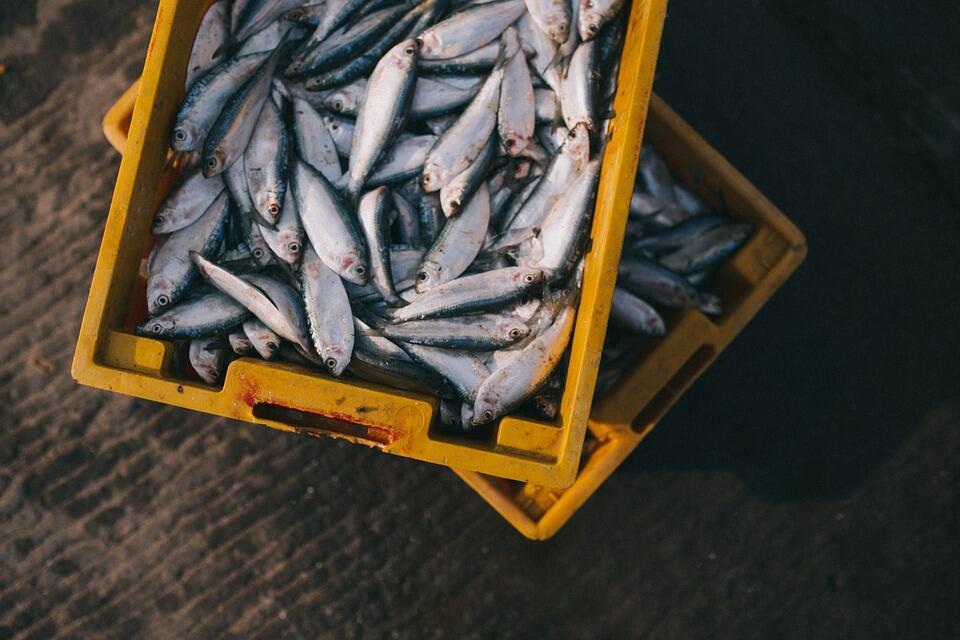 Waspadalah! Tidak Semua Ikan Aman Dikonsumsi. Ini Daftar Yang Terkontaminasi Merkuri