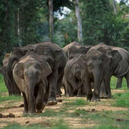 Kisah Menginspirasi Dari Gajah Yang Manusiawi